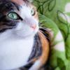 【愛猫日記】毎日アンヌさん#240