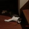 でも冷房の効いた部屋からは出ていくおネコさま。