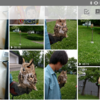 写真を容量無制限で保存できるAmazonのプライムフォトを試してみたよ