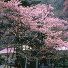 [旅行案内]★厚岸国泰寺(名桜探訪⑤)