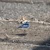 【野鳥】2月の奈良川レポート@恩田川&奈良川