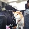 秋田旅行①〜わんこ連れ〜田沢湖・乳頭温泉郷・鹿角市