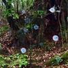 屋久島で木霊を呼ぶ方法を完全マスターしました!