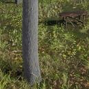 Unreal Engine 4 で「リアルな風景」を作る ~その2:リアルな木の作り方~【Unreal Engine #90】