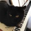 わたくしの春、ピアノと猫。