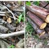 原木は自然に集まるものと薪つくりの際に出現する虫たち