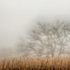 【撮影記】霧立ち込める秋の「八島ヶ原湿原」はとっても幻想的でした