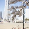2012 桜 ヨコハマ。