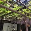 亀戸天神&香取神社訪問