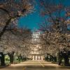 Snapshot ~『桜 2021』 #8