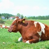 外国産牛肉って安全なの?