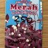 【ラベル】蕾つき 赤葉センニチコウ Merah レッドフラッシュ