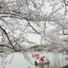 桜って。其の二。〜上野編〜