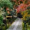 京都紅葉 鹿王院