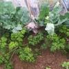 うちの、家庭菜園。椎茸栽培それから