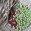 枯れてなお美しい豆たち