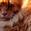 【夢日記】袋の中のネコ