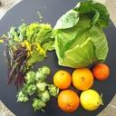 野菜ノート