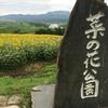 飯山菜の花公園 ひまわり鑑賞記。