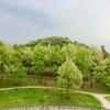 新緑の公園散歩