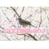 初心者向け野鳥観察イベントならストアカがおすすめ【東京・神奈川】