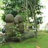 鎌倉 長谷寺に咲くあじさいは見なければ損⁉︎写真いっぱい撮ってきました。