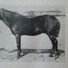 皇族と馬 ―名馬墨流號物語―