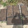 黒豆の苗作り