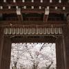 京都サボリ旅。平野神社を桜を堪能する。2018年3月28日