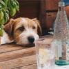 【老犬シニア犬介護】老犬の暑さ対策〜来るべき夏に向けて〜