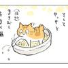 猫とトイレと食卓と