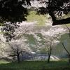 豪華な桜と、門出