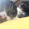 猫もダメにするソファ♪