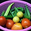 業務スーパーの冷凍野菜! 栄養と安全性を紹介します⁉ あの値段とコスパの良さは最強です!