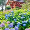 【三室戸寺と大吉山展望台】宇治🍵の見所自然スポットを巡ろう🌿