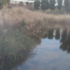 秋の賑わい、白幡沼。されど…