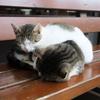 世界各地の猫!世界にはネコが沢山いたのでパチリ!!