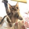 昨日の記事のお詫びと、花と猫と人の優しさ