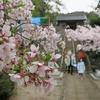 向かいの神社の春祭り