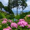 京都・西山 - 善峯寺の皐月と紫陽花