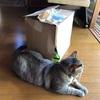 送料無料の罠? 猫砂+1(ローズジャム)を買ったら段ボール箱がww これは佐川さんのせいではない(ΦωΦ)