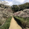 道明寺の梅は見ごろ。梅多め、古墳も多め。藤井寺市の旅