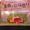 【話題】テーマ水槽・桃の節句は金魚でひな祭り