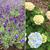 旅で出会ったお花たち
