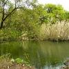 大溝城跡(2)乙女が池