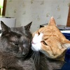 猫の鼻腔内リンパ腫㉕ブログ更新が出来なかった理由
