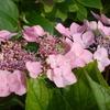 我が家の花のオンパレード