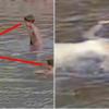 水遊びをしていた子供たち膠着させた'女性'の正体か。