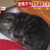 名古屋の市営団地で多数の猫が飼育されていた問題で猫41匹が動物愛護センターに保護される!妊娠していた猫は9日朝に2匹の子猫を出産!!