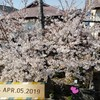 我が家からの桜
